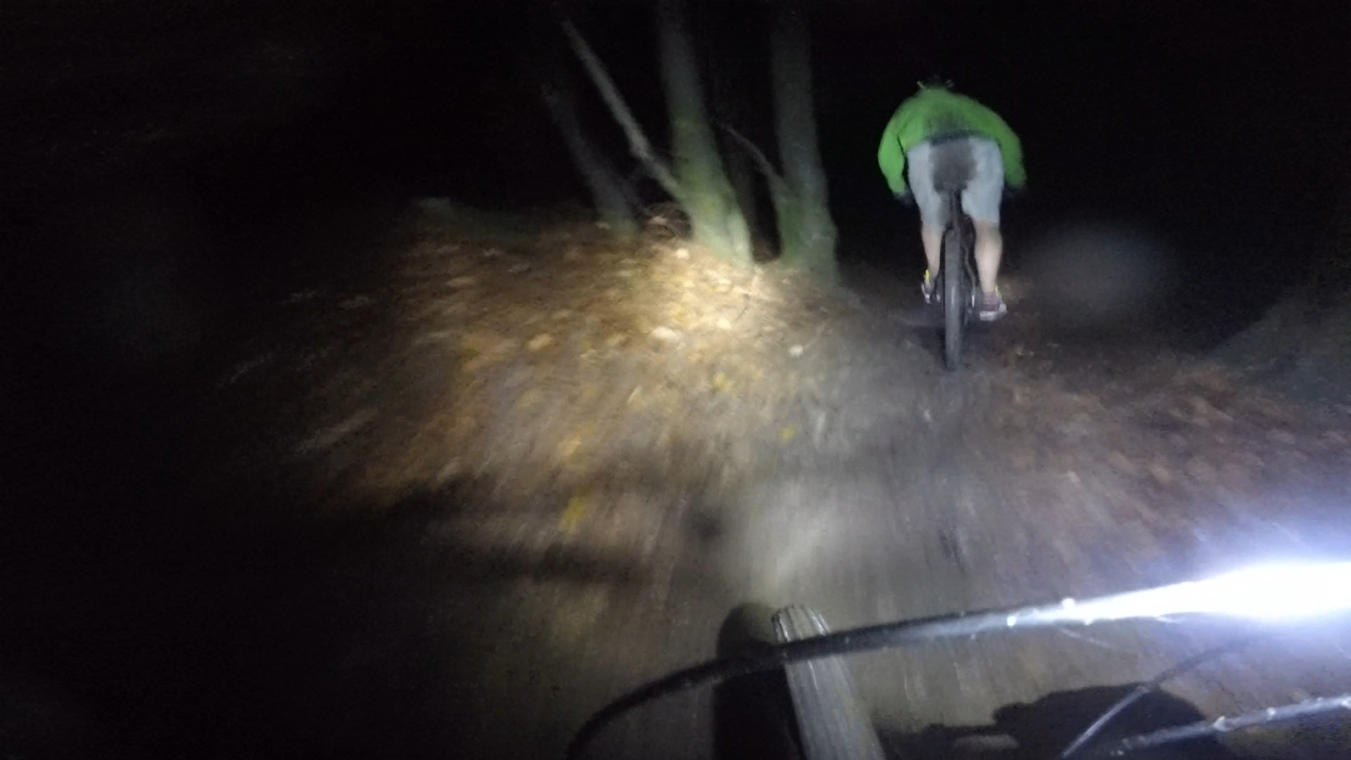 night riding in the forest of dean