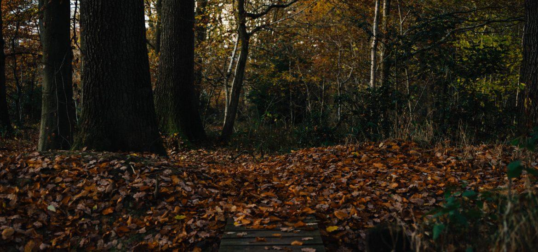 161118-haugh-woods-1